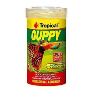tropical-guppy